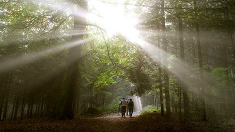 People walk through a forest during sunny autumn day on Mount Uetliberg in Zurich October 2, 2011.